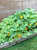 gardening, garden explosion, feed me seymour