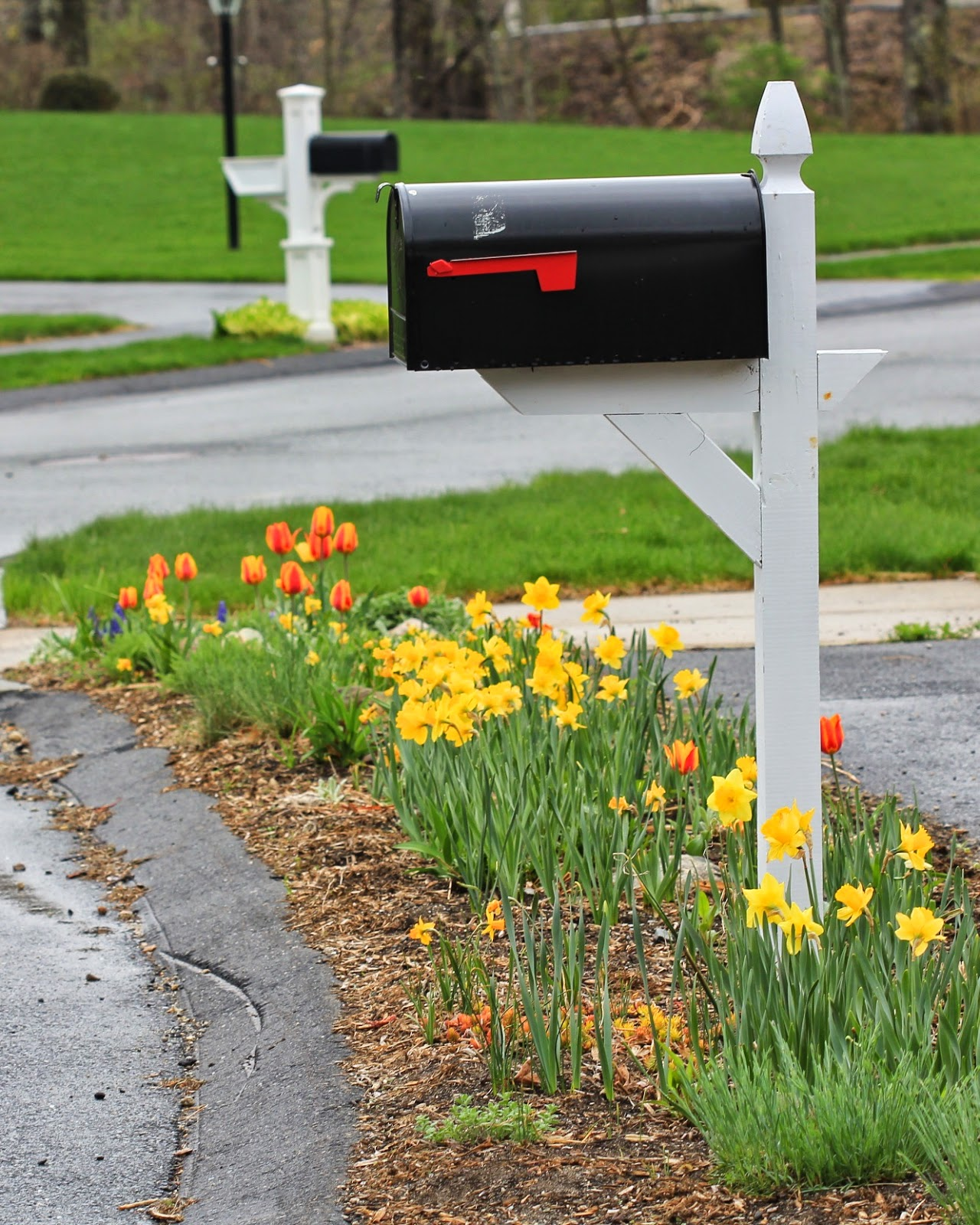 ... The Strip Between The Street And The Sidewalk Was An Uneven And  Unsightly Mess Of Weeds. To One Side Of The Driveway, The Hellstrip Was ...