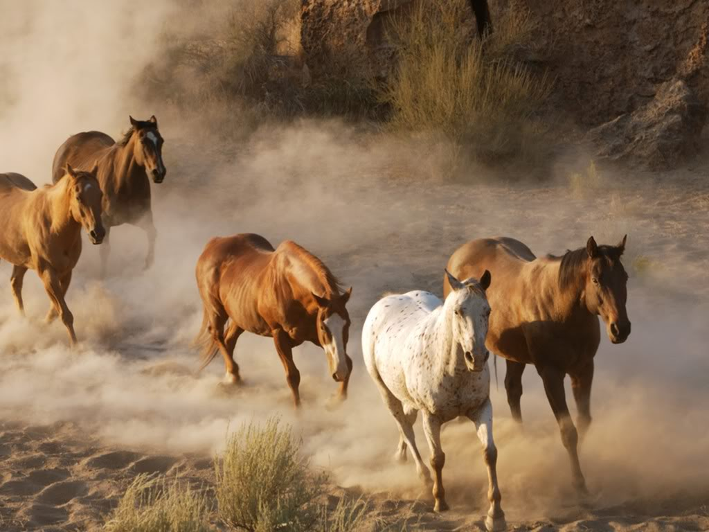 wild horse hd wallpapers - photo #5