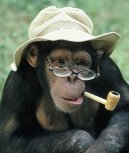 Funny Monkey in Glasses New Photos/Images 2012 | Funny Animals