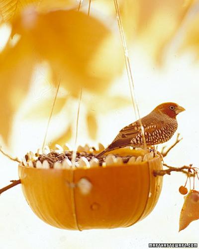 1+bird.jpg