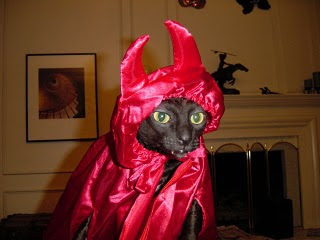 [Imagem: gato+diabo.jpg]