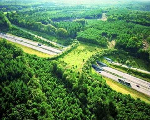 bridge, green