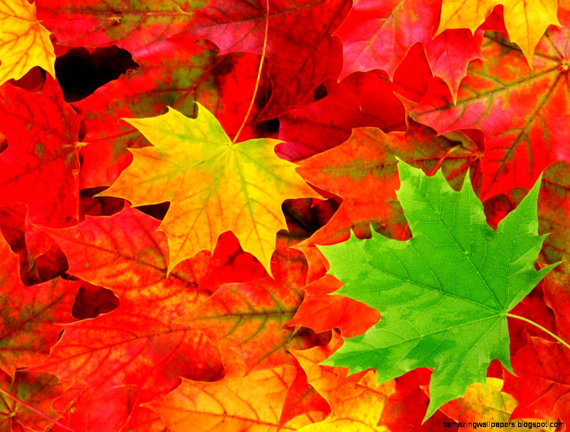 Fall Leaf Backgrounds Group 43