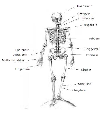 det som skjer det skjer navn på muskler i kroppen