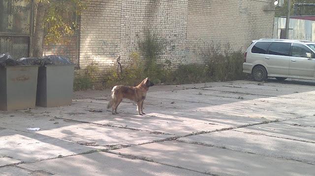 Стоящая собака