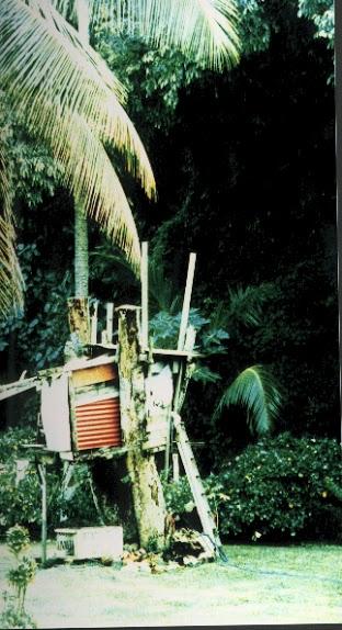 1999 Treehouse-Rarotonga