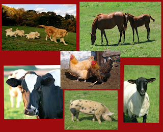 Humans are not livestock!
