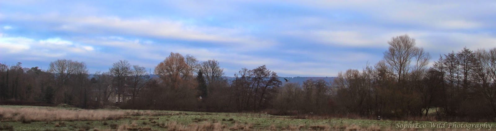 view of a line of alder and willow trees edging a rushy flood meadow, distant hills behind. Winter morning sunshine.