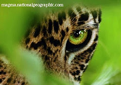 El animal más bello