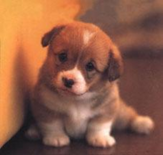 Cute Puppies Kittenswallpaper on Cute   Cute Puppies Pictures   Pictures Of Puppies   Kitten Pictures