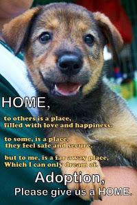 Zeus Pet Adoption