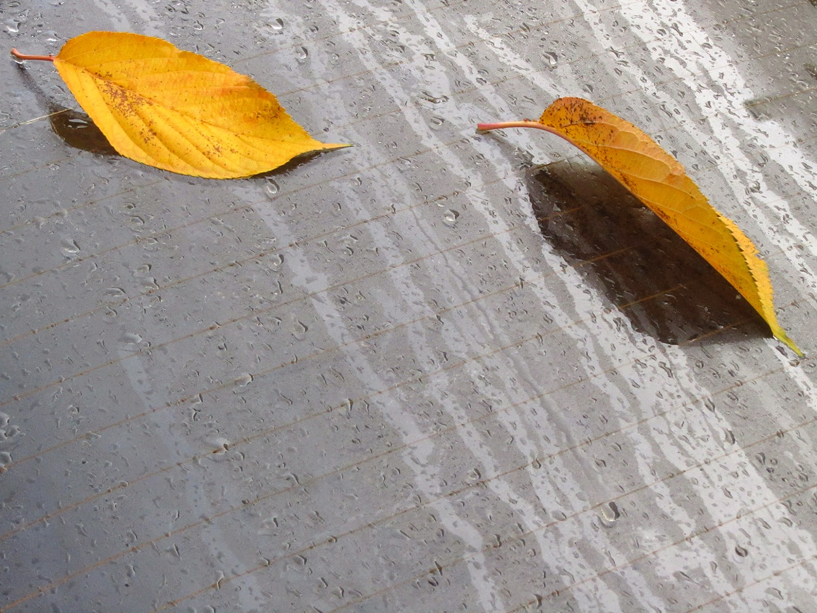 two yellow leaves on the rear window of a car