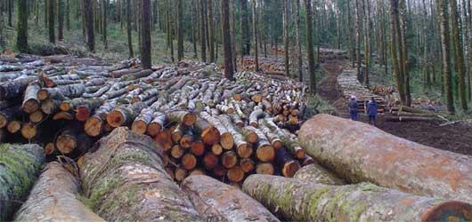 La deforestacion en El Salvador