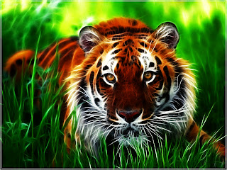 Free Tiger Wallpaper