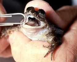 http://www.jadigitu.com/2012/10/inilah-7-katak-paling-unik-di-dunia.html