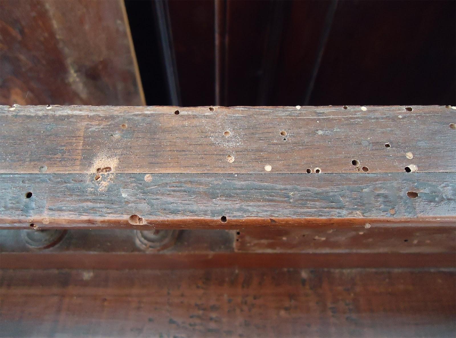 Tarli del legno: I fori da tarli su mobili e travi