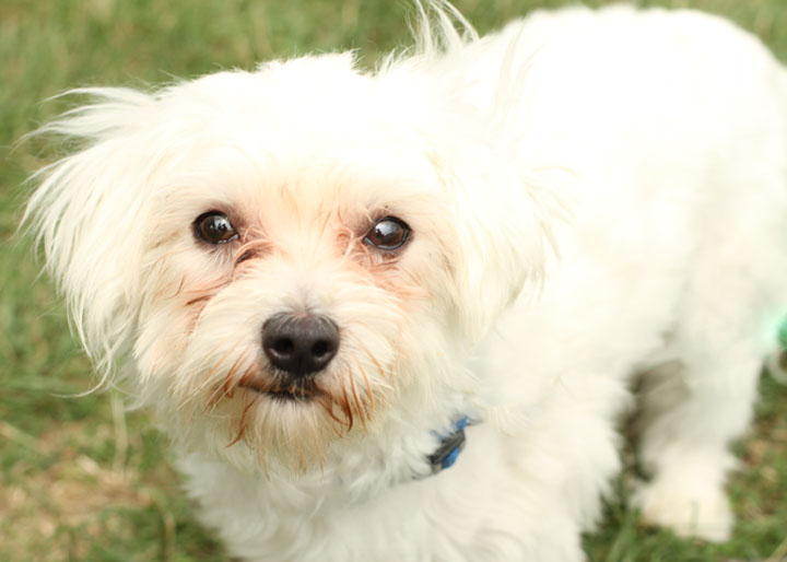 terrier mix puppies dog training home dog types