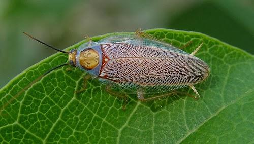 http://3.bp.blogspot.com/-UJSja68UM9s/UxUv6SMKBCI/AAAAAAAABeE/poK7e5anEOQ/s1600/Colourful+roach+(Balta+sp),+Lizard+Island,+Australia.jpg