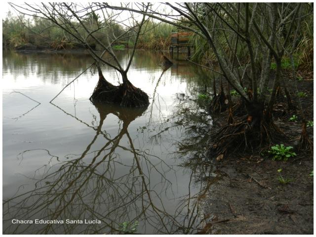 Sigue subiendo el nivel del agua en el tajamar chico  - Chacra Educativa Santa Lucía