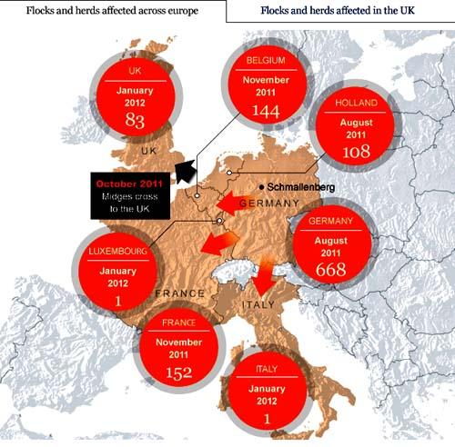 Bệnh do Schmallenberg virus (SV) là một bệnh lý mới đang nổi ở gia súc và vật nuôi đã được phát hiện tại Bỉ, Đức, Hà Lan và Vương quốc Anh.