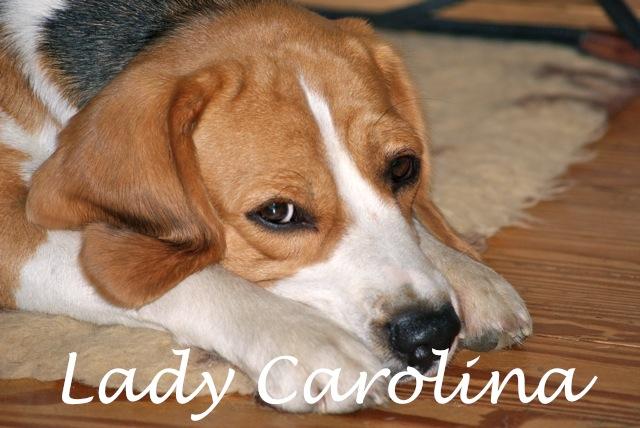 Lady Carolina
