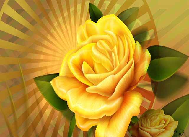 Yellow Roses Pictures