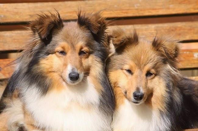 Profil osobowości psa