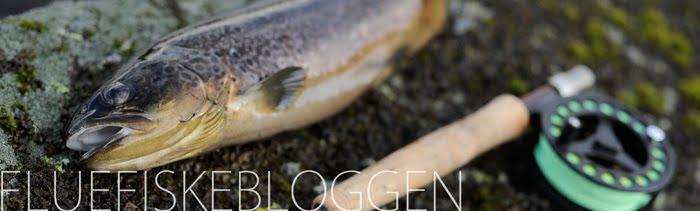 Fluefiskebloggen
