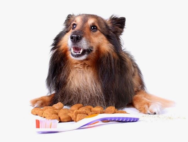 Dieta wzmacniająca psie zęby