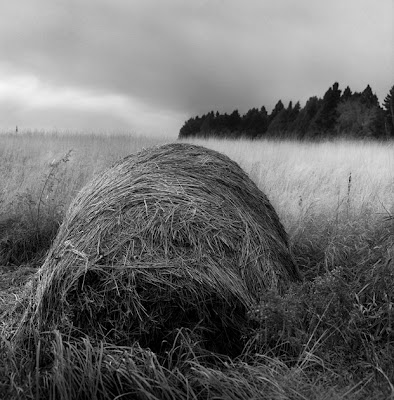 Hay Bale/Cedars, 1984, by Jerry Mathiason