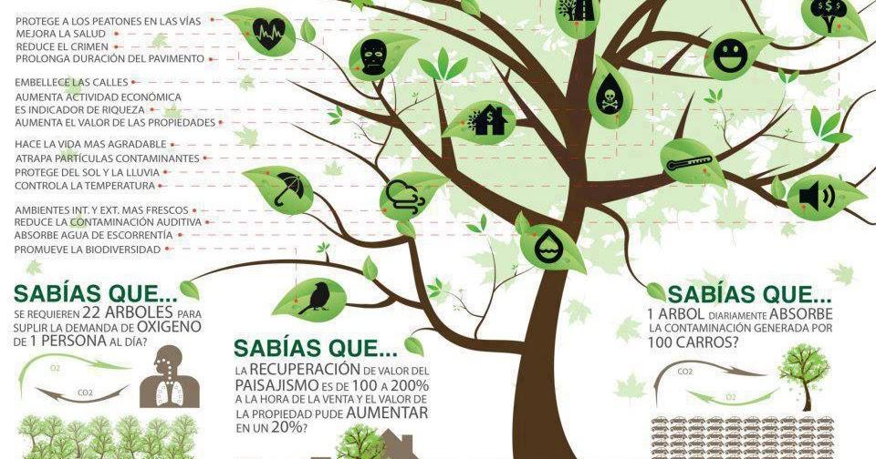 Educaci n y curiosidades beneficios elementales de for Cuanto mide un arbol