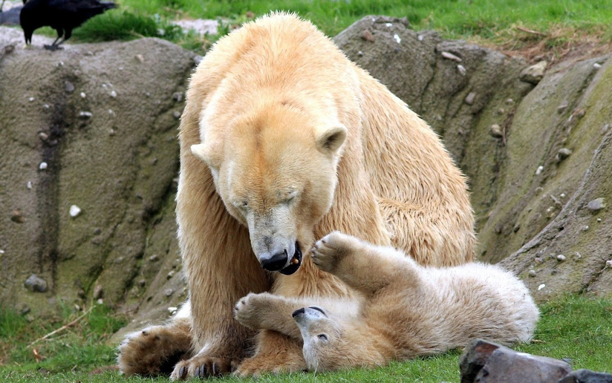 Bear Playing with Baby