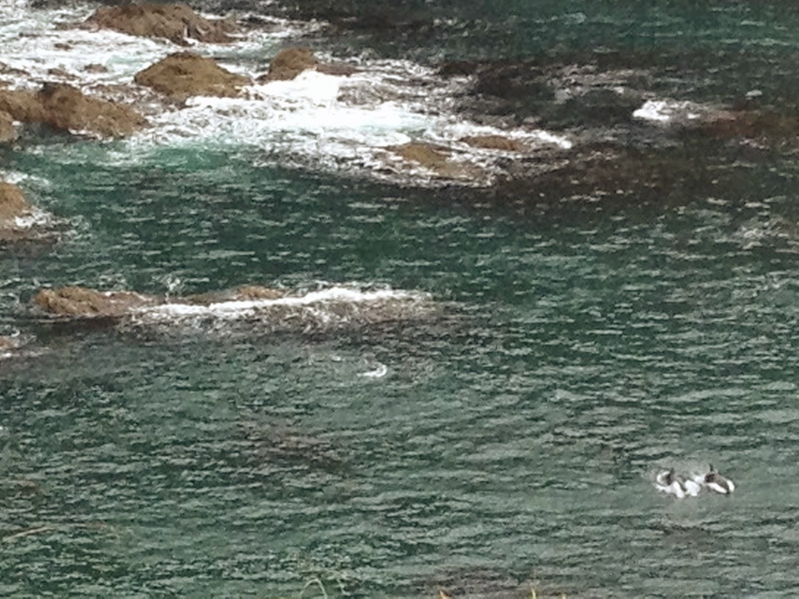 Dolphins jumping in the Bay of Islands