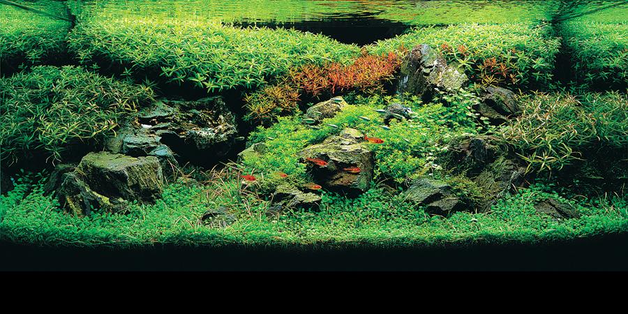 Contoh Aquascape di atas ini adalah salah satu penepatan tanaman yang ...