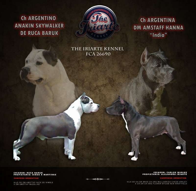Publicado por THE IRIARTE KENNEL en lunes, mayo 16, 2011