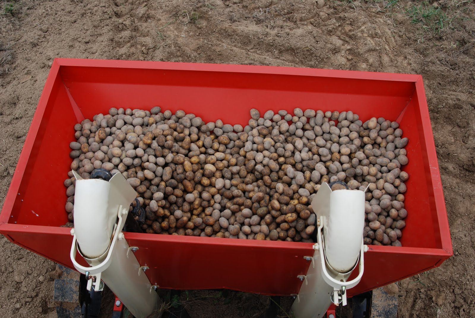 Les jardins de priape plantation des pommes de terre - Periode plantation pomme de terre ...