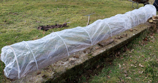 Covered in plastic to keep the ground warm