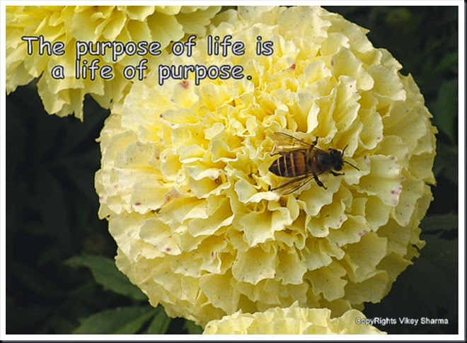 Flowers and Bee Quotes and wallpapers