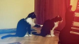 Кошка просит прощения / Ржу не могу