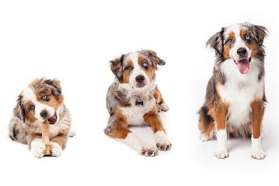 ¿De quién fue la idea de que un año perro equivale a siete años humanos?