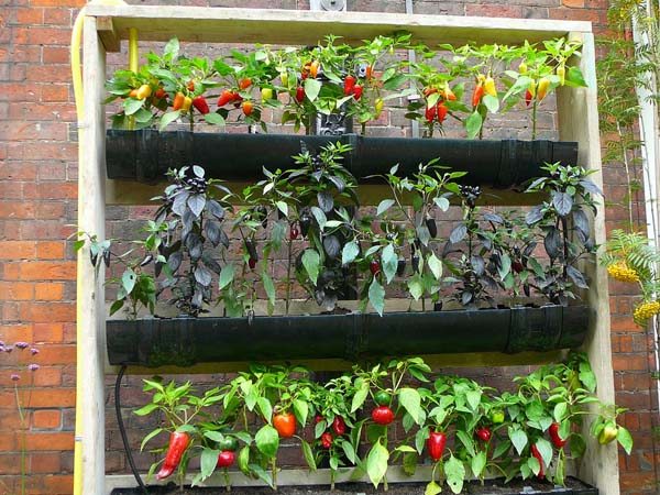 contemporary vegetable garden designs - Home Vegetable Garden Design