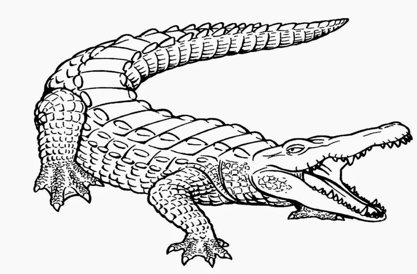 baby alligator pages coloring pages