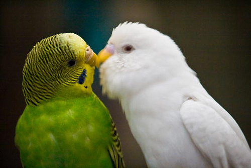 Beautiful love birds images - photo#12