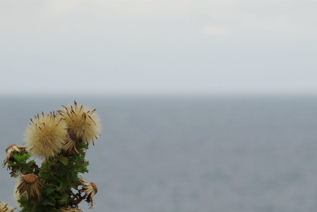 plants at the sea side