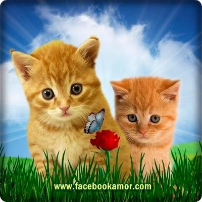 imagen de gatos en campo verde