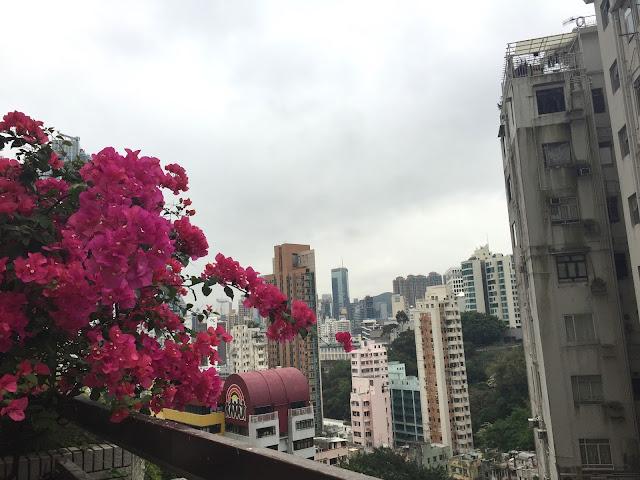 Hong Kong, Hong Kong Island, Cestování, Hong Kong na vlastní pěst, co dělat v hong kongu, what to do in hong kong, hong kong kristýna, kristýna vacková, travel blog, travelling, asia, blog, travel blog, fashion house cz hong kong, hong kong, blog about hong kong, expat hong kong, hongkong, hongkong na vlastní pěst, hongkong bez cestovky, co dělat v hongkongu, Stanley market, Stanley, Trhy Stanley Hongkong, hong kong art, shopping hong kong, nákupy v hongkongu, central and western district promenade, shopping in hong kong, holiday in hong kong, dovolená hongkong, hongkong ostrov, hongkong hlavní ostrov, hong kong main island, the peak tram hong kong, the peak, hong kong view