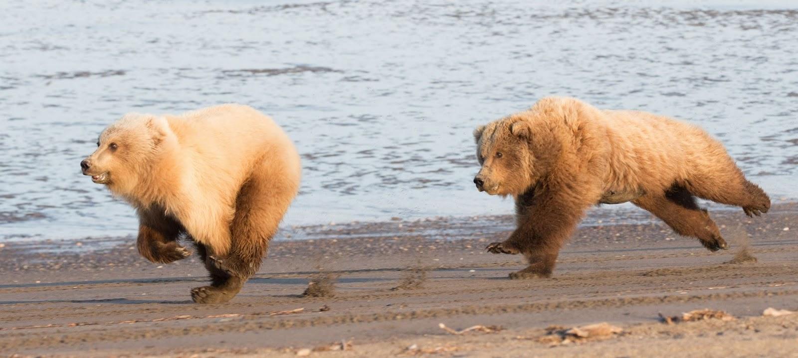 Adorables imgenes de osos disfrutando libres de un da de
