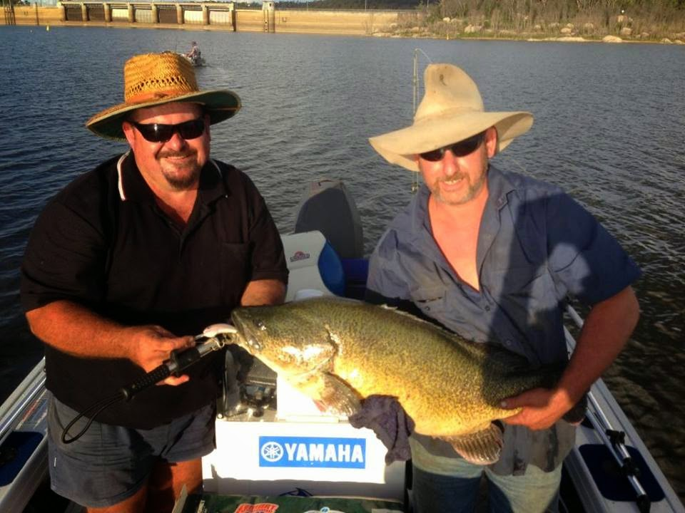Tackle world towoomba fish report fishing report 19 03 2015 for Bills fishing report
