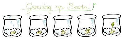 educació, il·lustració procés de germinació / education, illustration germination process